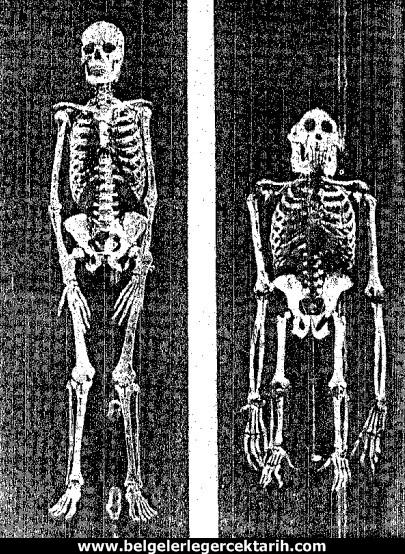 atatürk dönemi ders kitaplari darwinizm atatürk dönemi ders kitaplari evrim teorisi atatürk darwinizm, atatürk evrim teorisi atatürk ateist miydi, m. kemal darwinizm, atatürk dönemi din dersi atatürk din dersleri insan maymun goril